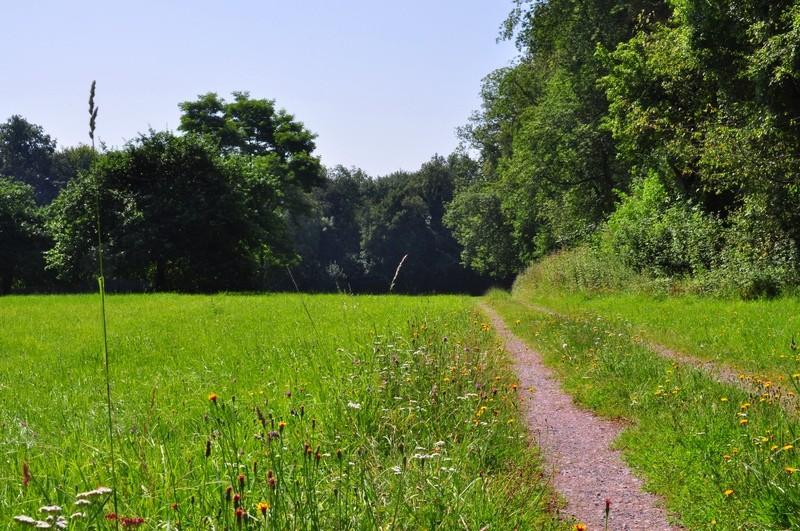 """Wann ist ein Weg ein Wanderweg? - oder: Der Wanderweg """"Großbachtal - BD3"""" bei Bendorf"""