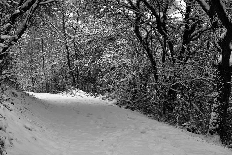 """Spuren im Schnee - oder: die """"Erlebnisschleife Wiedblick-Tour"""" bei Waldbreitbach"""