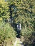 Traumpfad Waldschluchtenweg (Wanderführer Traumpfade)