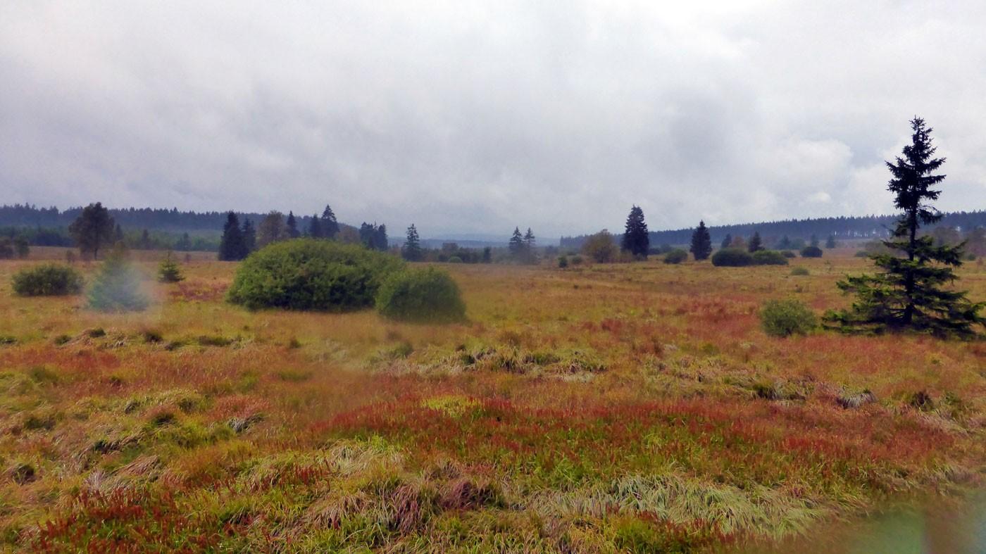 Wandern in den Ardennen - Im Hohen Venn