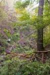 Traumpfad Höhlen- und Schluchtensteig (Wanderführer Traumpfade)