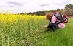 Von Heidschnucken und Heide pur am Heidschnuckenweg (Etappe 10)