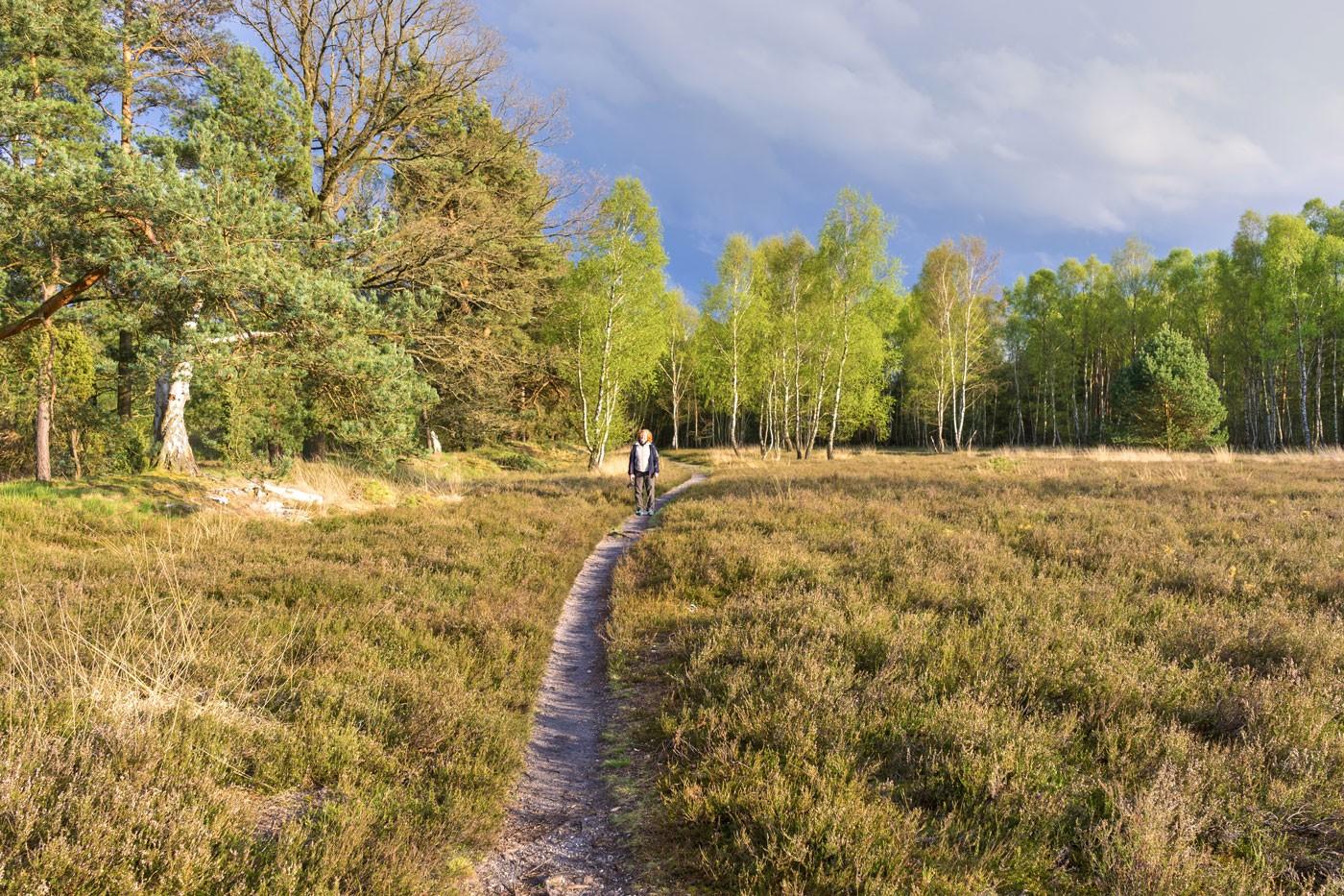 Wie meine Höhenangst den Heidschnuckenweg lieben lernte (Autorin: Petra Müller)