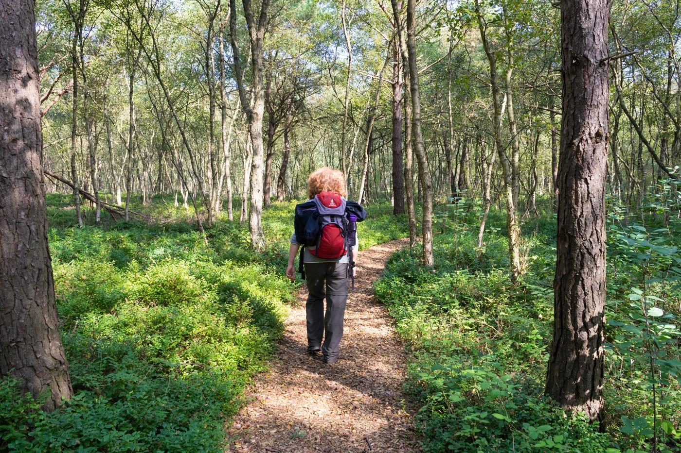 Sind so viele Kraniche: der »Nordpfad Huvenhoopsmoor«