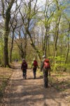 Drei-Wäller-Weiher-Weg im Westerwald