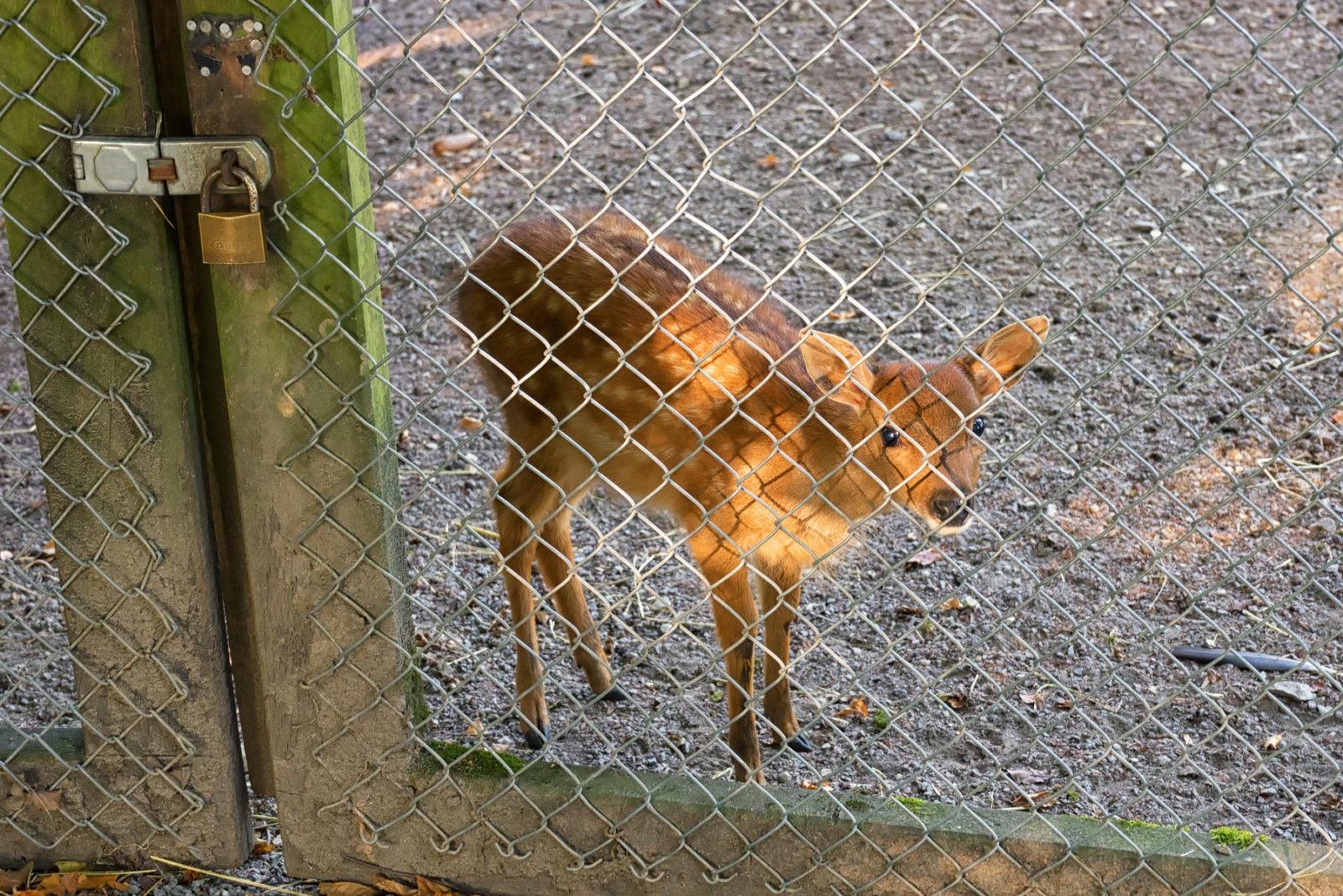 Heimat-Tierpark Olderdissen