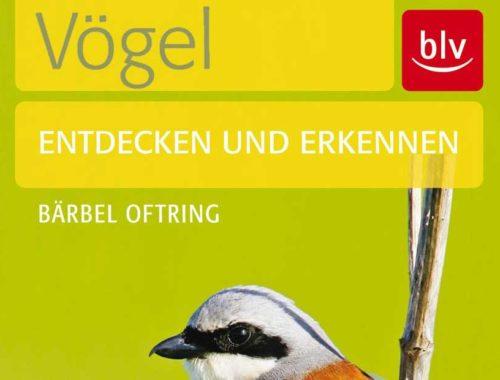 Vögel - entdecken und erkennen (BLV)